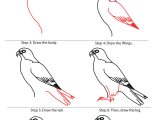 Easy Drawings for 1st Standard How to Draw Falcon Google Search 1st Grade Projects Drawings