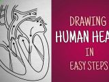 Easy Drawings for Grade 1 Easy Way to Draw Human Heart Life Processes Ncert Class 10