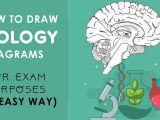 Easy Drawings for Grade 1 How to Draw Biology Diagrams In An Easy Way Class 10 to Class 12