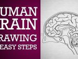 Easy Drawings for Grade 1 How to Draw Human Brain In Easy Steps Control Coordination