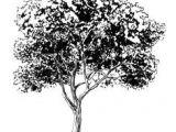 Easy Drawings Of Trees 156 Best Drawing Trees Images In 2019 Drawing Trees Tree Drawings