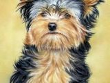 Easy Drawings Of Yorkies 161 Best Cartoon Yorkies Images Dog Paintings Drawings Of Dogs