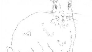 Easy How to Draw A Bunny Hop to It and Draw A Bunny Rabbit by Following Easy Steps