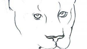 Easy Jaguar Drawings How to Draw A Jaguar Easy Step by Step Prslide Com