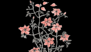 Flower Drawing Tumblr Transparent Arabella Artsy Art In 2019 Drawings Flowers Flower Drawing