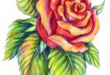 Flowers Drawing Art Colorful 25 Beautiful Rose Drawings and Paintings for Your Inspiration