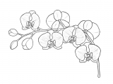 Flowers Drawing Easy with Color How to Draw Flowers the Sexy and Sultry orchid