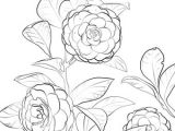 Flowers Drawing Manga Japanese Camellia Coloring Page Coloring Books Coloring Pages