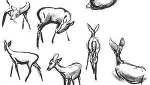 Gesture Drawings Of Animals Bambi Deer Studies Animal Drawings Animal Sketches