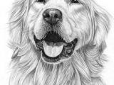 Golden Retriever Drawing Easy 46 Best Golden Retriever Drawings Images Drawings Golden