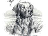 Golden Retriever Drawing Easy Golden Retriever Dog Art Print Signed by Artist Dj by