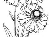 Good Drawing Flowers 776 Best Drawing Images Drawings Pencil Drawings Bird Paintings