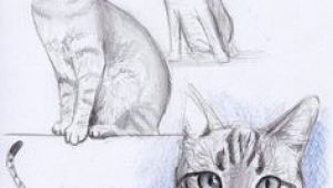 Good Drawings Of A Cat 299 Best Drawing Cats Images Draw Animals Cat Illustrations Cat Art