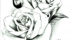 Good Drawings Of Roses Sad Rose Afg 04 Drawing Tattoos Picture Tattoos Tattoo Photos