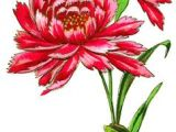 Graphic Drawings Of Flowers Flower Drawings Things I Love Pinterest Drawings Flowers and
