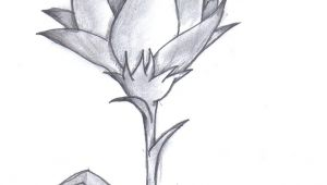 Graphite Drawing Flowers Pencil Drawing Of A Flower Amazing Pencil Drawings Flowers