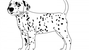 Guided Drawing Of A Dog Learn How to Draw A Dalmatian Dog Dogs Step by Step Drawing