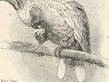 Half Animal Half Human Drawing Animal Biology Human Biology Parts Ii Iii Of First