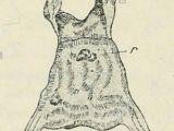 Half Animal Half Human Drawing Textfig 4 Den Chitingabeln ist Die Ven Dorsale Ansicht