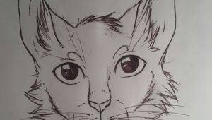 Here S A Drawing Of A Cat Here S some Random Cat A My Art A Pinterest Random
