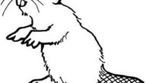 How to Draw A Beaver Easy 26 Best Beaver Cartoon Images Beaver Cartoon Cartoon