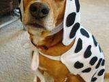 How to Draw A Dalmatian Puppy Easy Dalmatian Halloween Ideas Types Clothes Diy Dog