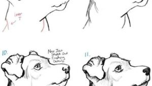 How to Draw A Dog Realistic but Easy 58 Ideas Dogs Face Drawing Animals Dogs Drawing In 2019
