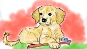 How to Draw A Golden Retriever Face Easy How to Draw A Golden Retriever Puppy