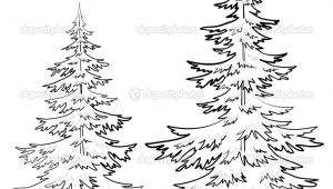 How to Draw A Pine Tree Easy Pine Tree Drawings Black and White Tree Drawings Pencil
