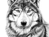 How to Draw A River Easy Gray Wolf by Dave the Drawing Guy Wolf Drawing Cool Wolf