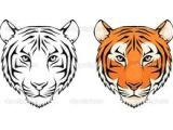 How to Draw A Tiger Face Easy 38 Best Tiger Tattoo Outlines Images Tiger Tattoo Tattoo