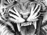 How to Draw A Tiger Face Easy Roaring Tiger Tiger Tattoo Design Tiger Drawing Tiger Sketch