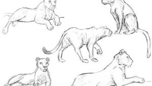 How to Draw Beautiful Animals 25 Beautiful Animal Drawings for Your Inspiration How to