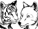 How to Draw Cool Animals Tigerwolf Tiger and Wolf Cool Animal Drawings