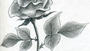 I Draw A Simple Rose Image Result for L How to Draw A Simple Rose Buku Sketsa