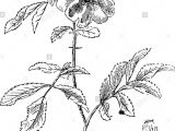 Is Drawing Flowers Haram Guin Stockfotos Guin Bilder Alamy