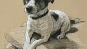 Jack Russell Dog Drawing Image Result for Jack Russell Dog Tattoos Art Pinterest Dog
