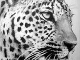 Jaguar Animal Drawing Adams Kat by Bobby Kro On Artwanted In 2019 Realistic
