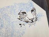 Jaguar Animal Drawing Leopard Die Schnellste Raubkatze Der Welt Bauanleitung Zum