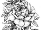 Line Drawing Of Flowers Roses Rose with Banner New Easy to Draw Roses Best Easy to Draw Rose