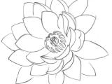 Line Drawing Of Lotus Flower Lotus Tattoo 2 by Metacharis On Deviantart Tattoos and Flash