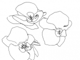 Line Drawings Of Roses Brookes Delirium Outklasse I Love Line Drawings Inspiration