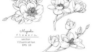 Magnolia Flower Drawing Easy Sketch Floral Botany Collection Magnolia Flower Drawings