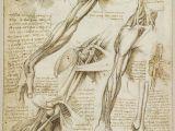 N Drawing Book A Rare Glimpse Of Leonardo Da Vinci S Anatomical Drawings Art Da