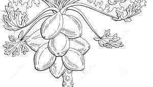 Papaya Tree Drawing Easy 193531 Drawing Free Clipart 839