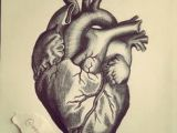 Pen Drawing Of A Heart Related Image Designing My Tattoo In 2019 Art Drawings Tattoos