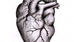 Pencil Drawing Of A Human Heart Anatomically Correct Human Heart by Niku Arbabi Embroidery