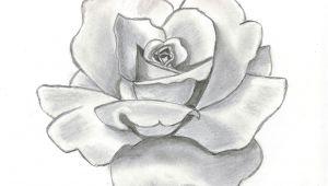 Pencil Drawings Of Flower Gardens 61 Best Art Pencil Drawings Of Flowers Images Pencil Drawings