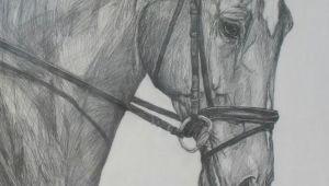 Pencil Easy Horse Drawing Pencil Drawings Pencil Drawing Learn Drawing Horses