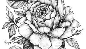 Picture Of A Rose Drawing Easy Rose with Banner New Easy to Draw Roses Best Easy to Draw Rose